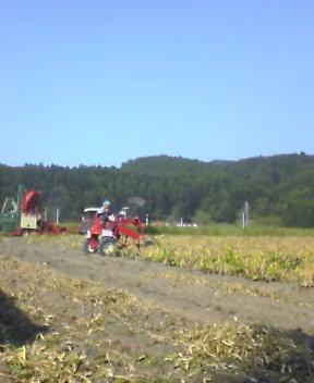 豆刈り風景